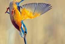 IJsvogels, prachtig!
