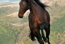 equinoss