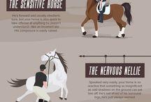 Equine Psychology