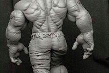 Hulk anatomi