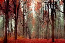 fall, my love
