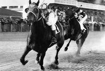 Animals/Horses / by Barbara Farnsworth