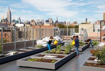 Urban Farming and Green City