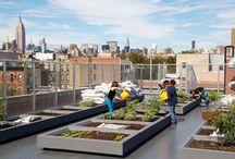 Urban Farming and Green City