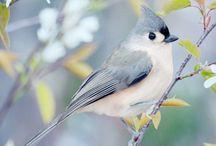 birds***!!!!