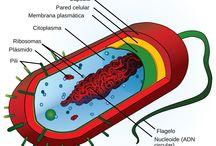 Biologie ©