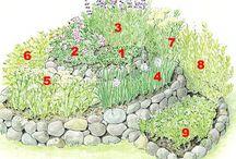 Jardin Exterior Plantas Aromaticas