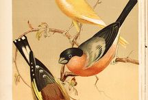 obrázky vtákov