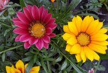 Fleurs d'été / Quelques fleurs de notre production, pour un été tout en couleur