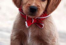Puppies & Doggies