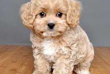 Mascota / Perros!!!