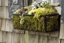 Jardín, flores y plantas / Ramos, flores, detalles florales, jardines