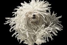 Hond foto's