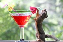 ~Gotta Love A Yummy Cocktail~ / by Melissa Scott