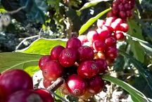 Our Coffees / Stockton Graham & Co. coffees