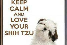 Love my shih tzu dog