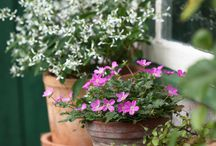 Gardening : Containers