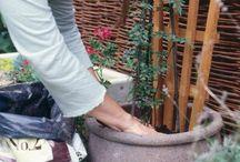 Garden ideas / Climbing vines
