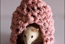 Ratties / Ideas for the Rats / by Kelly Crull