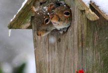 Adorabili scoiattoli