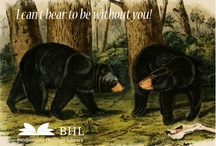 Valentine's Day Cards / Valentines featuring historic biodiversity images from BHL. / by BHL