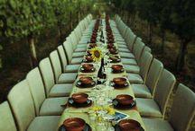 Marche vino bianco verdicchio rosso Conero e rosso piceno. Carine di produzione. Vini premiati con tre bicchieri / Vini e aziende