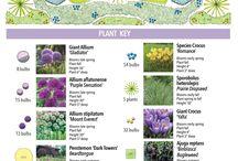 Gardening @ideas