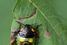 Invertebrates / by Adam Jack