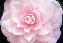 Garden / by Jennifer Morris