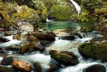 Fiordland Wildlife, Flora and Fauna