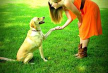 Dog Training / This pin board is for our fans. Dog Trainers and Graduates of Animal Behavior College. / by AnimalBehaviorC