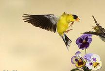 Movement of Birds