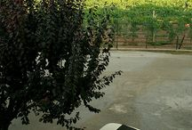 Fiat 500 / by Aria Bisma