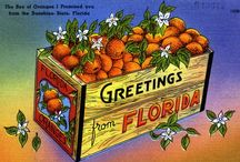 Greetings from Florida! / I visited Florida in 2013 and fell hopelessly in love with it. Wonderful, scenic FLORIDA!