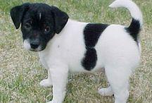 Danish-swedish farmdog <3