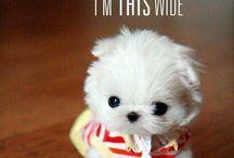Love Puppies<3