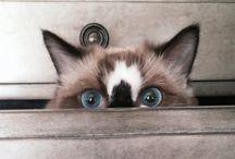 gatos ❤