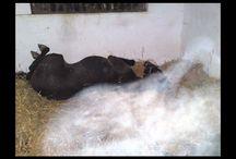 et oui ,les animaux ont aussi une âmes !!!!