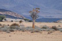 Images of Namib Desert / Area around Bloedkoppies in the Namib Desert