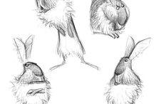 sketch(animal)