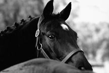 all the pretty horses / by Chelsie Stover