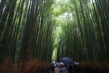 竹林 / 京都 嵐山の竹林