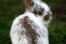 Rabbits in Real Life / Do you wanna buy a bunny?