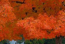Autumn, my favorite! / by Natasha Nicole Richards