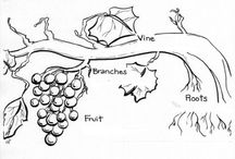 Vineyard images.
