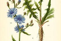 Tattoowierbare Pflanzen