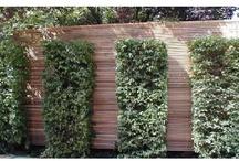zahrada XXX