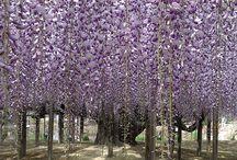 Color's World / purple,violet / by Sanae H
