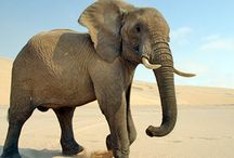 7 Amazing Facts Proving That Elephants Are Quite Smart Creatures