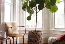 [IDEAS] Plants